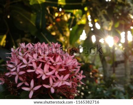 Free photos pink spike flower avopix beautiful pinkspike flower 1165382716 mightylinksfo