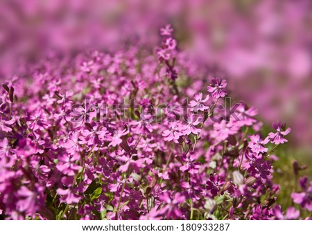 Beautiful pink spring flowers blossom into spring