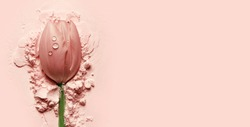 beautiful pink tulip lying on a pink powder.postcard, cosmetics, nature, macro, beauty, naturalness, romance, banner.