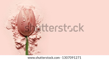 Photo of  beautiful pink tulip lying on a pink powder.postcard, cosmetics, nature, macro, beauty, naturalness, romance, banner.