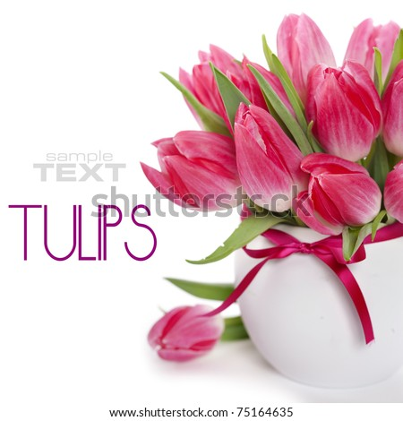 Beautiful pink tulips in a vase on a white background (with sample text)