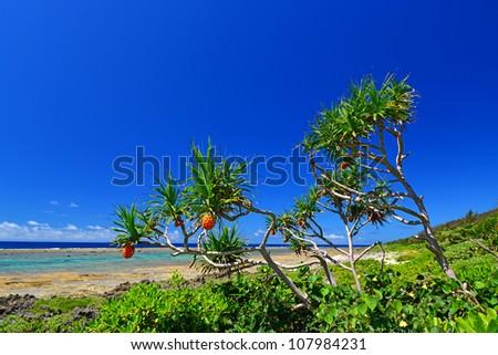Beautiful plant in Okinawa