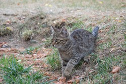 Beautiful playful stray cat chasing something outdoors, homeless animal, cute small street kitty, striped cat with beautiful eyes