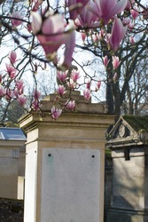 beautiful poetic flower symbol of life over historical tombstones and ancient graveyard monuments at Le Pere Lachaise Paris cemetery, springtime memory