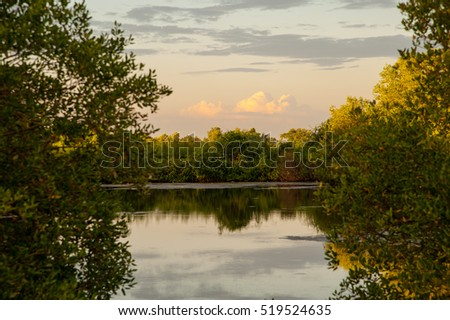 Beautiful pond through tree and cloud