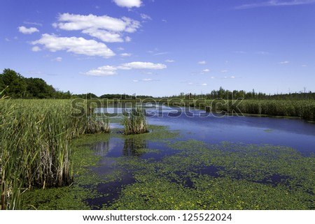 Beautiful pond with cattails and lily pads