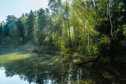 Beautiful pond with drowned birch tree in the morning forest. Selectivfe focus.