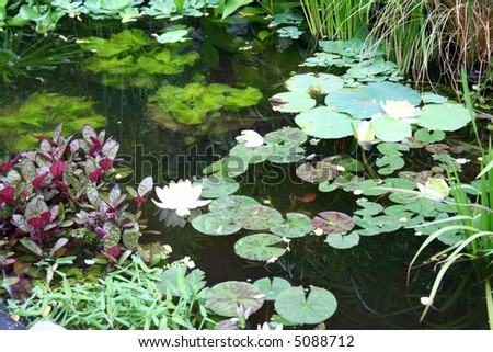 Beautiful pond with the lotuses