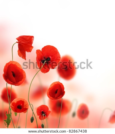 Beautiful poppy background with free space for text.Focused on front flowers.