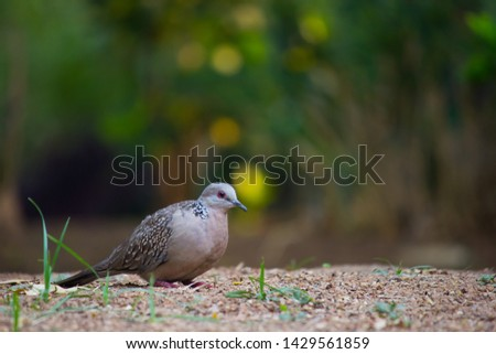 Beautiful Portrait of a Dove in its natural habitat in a soft blurry background