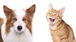 Beautiful portrait of adorable pets