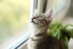 Beautiful portrait of cat smile on the white window with grass in a pot. Kitten play and surprise Smelling home plants. Veterinary Concept of damage from pets.