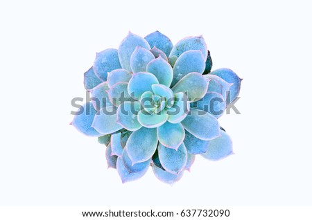 Beautiful Potted Cactus isolate on white background