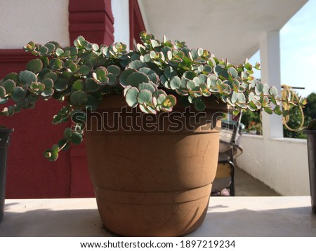 Beautiful potted flower with green leaves Stok fotoğraf ©
