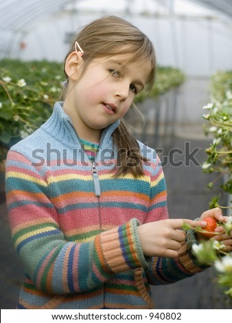 Beautiful preteen girl collecting strawberries