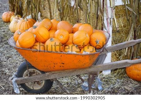 Beautiful Pumpkins In A Cart