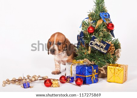 Beautiful puppy with Christmas decorations on white background