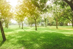 Beautiful pure sunrise morning in public park with green grass, tree and flower. Half moon park in Ho Chi Minh city, Vietnam.