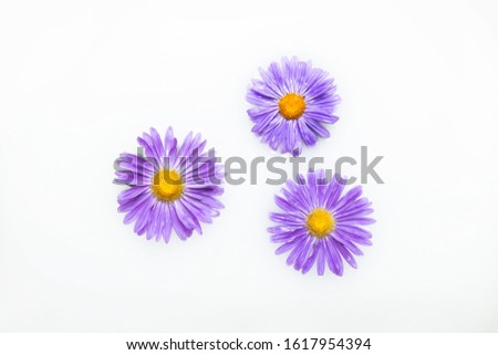 Beautiful purple flowers in a milk bath. The concept of spa treatments, relaxation, spa treatments, therapy