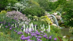 Beautiful purple flowers with a waterfall in the background in Salt Lake City Utah
