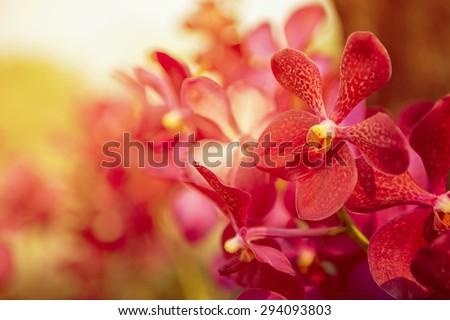 beautiful purple orchid flower...