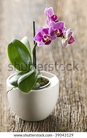 Beautiful purple orchid on wooden board close up