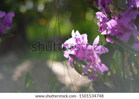 Beautiful purple orchid.purple orchid.Thai Beautiful purple orchid.
