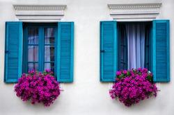 Beautiful purple petunias in the open close windows