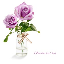 Beautiful purple rose on white background