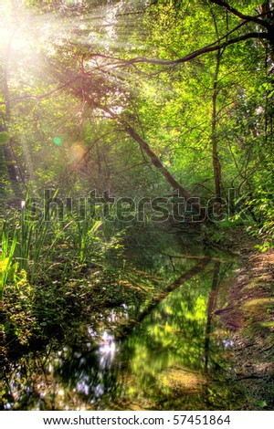 Beautiful quiet forest landscape with a lake