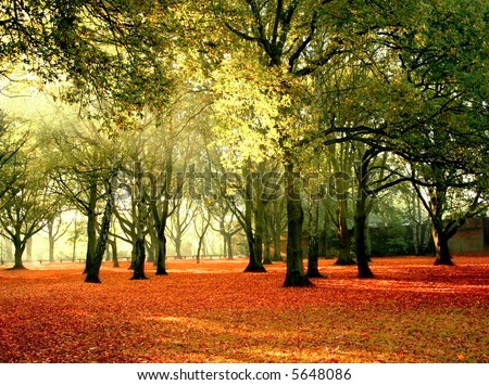 Beautiful quiet park in bright autumnal colors, with bright colored leaves covering the ground.