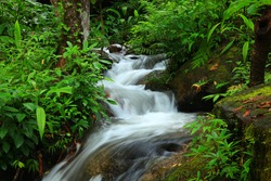 Beautiful rain forest at doi inthanon national park, Thailand
