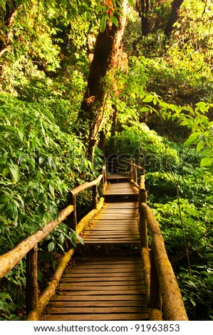 Beautiful rain forest at doi inthanon national park, Thailand