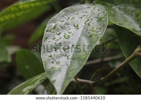 beautiful raindrop in the leaves
