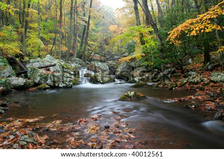 Beautiful rainy day during autumn along a creek in Virginia.