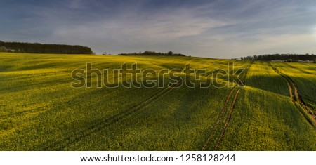 Beautiful rape field in Sarlos, Hungary. Aerial view. Stock photo ©
