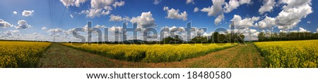 Beautiful rapefield with nice cloudscape in panorama shape