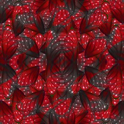 Beautiful red and grey background pattern made of Stripe Blue Butterfly's wing skin texture