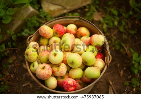 beautiful red apples on the table