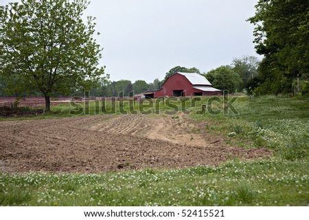 Beautiful red barn with plowed garden, white and red clover.