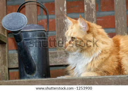 Beautiful red cat outdoors sitting on the bench