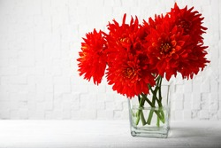Beautiful red dahlia flowers in vase on light background