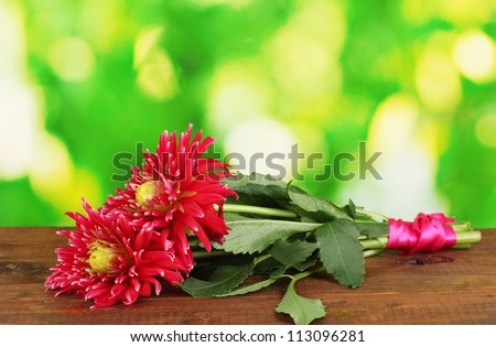 Beautiful red dahlias on bright colorful background close-up