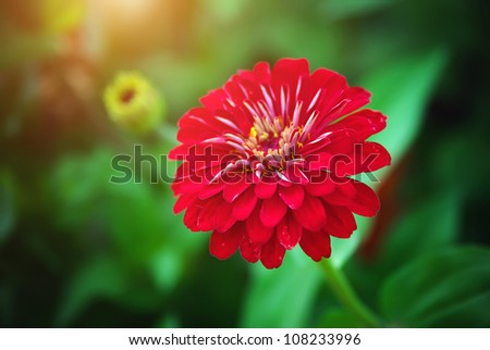 Beautiful red flower. Composition of nature.