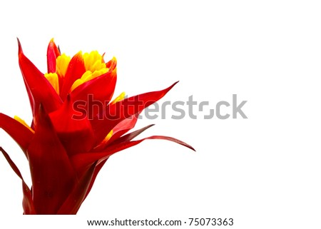 Beautiful red flower (Orchid) isolated on white background