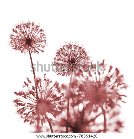 Beautiful Red Flowers / abstract  composition on white background