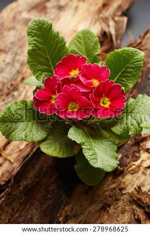Beautiful red flowers on wooden background