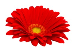 Beautiful red gerbera flower isolated on white background. Red gerbera isolated