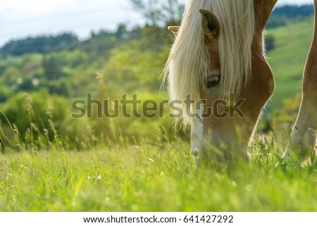 Shutterstock Beautiful red horse grazing in a meadow in spring