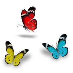 Beautiful Red, Light Blue and yellow butterfly flying up